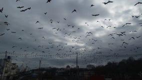 Der Himmel von Odessa, gefüllt mit Vögeln Stockbilder