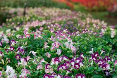 Der Hintergrund der bunten Blumen, bunte Blumen lizenzfreies stockfoto