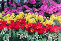 Der Hintergrund der bunten Blumen, bunte Blumen lizenzfreie stockfotos