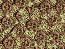Der Hintergrund der Blumen eines Kaktus stockbild