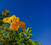 Der Hintergrund des Titels oder des Deckblattes auf Gartenbau- oder Sommerferien Lizenzfreies Stockfoto