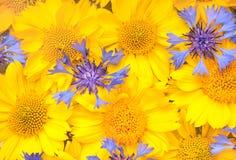 Der Hintergrund gebildet durch die gelben und blauen Blumen Lizenzfreies Stockbild