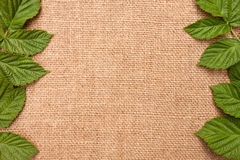 Der Hintergrund mit den Blättern der Himbeere Lizenzfreies Stockbild