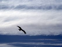 Der hochfliegende Adler. Stockfotos