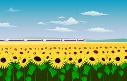 Der Hochgeschwindigkeitszug, der durch ein Feld von Sonnenblumen rast stock abbildung