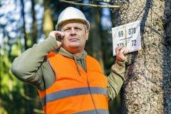 Der Holzfäller, der am Handy nahe spricht, markierte Baum im Wald Lizenzfreie Stockbilder