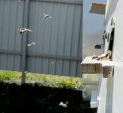 Der Honig, Biene Stockfotos