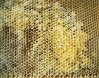 Der Honig, Biene Lizenzfreie Stockbilder