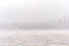 Der Hudson im Winter mit Enten auf Eis und Misty New Your Cityscape im Hintergrund Stockfotografie