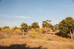 Der Hulun Buir Graslandherbst in China Lizenzfreie Stockbilder