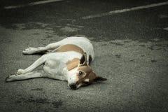 Der Hund Stockfotografie