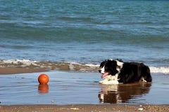 Der Hund lizenzfreie stockbilder