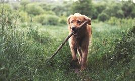 Der Hund stockbilder