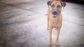 Der Hund Lizenzfreies Stockbild