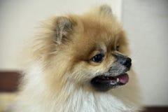 Der Hund Stockfotos