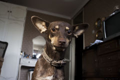Der Hund stockfoto
