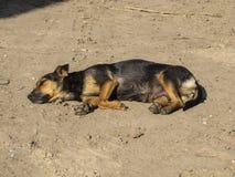Der Hund aalen sich in der Sonne Lizenzfreie Stockfotografie