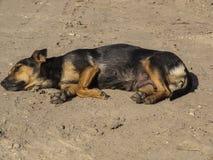 Der Hund aalen sich in der Sonne, Nahaufnahme Stockbild