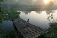 Der Hund auf der Brücke, die alte verfallene Brücke über einem Fluss an der Dämmerung, der Nebel über dem Wasser, Lizenzfreie Stockfotos
