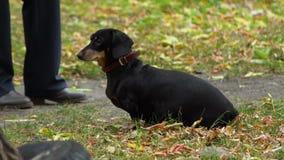 Der Hund in Autumn Park stock footage