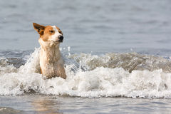Der Hund badet im Wasser Lizenzfreies Stockfoto
