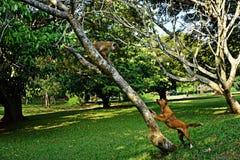 Der Hund bellt am Affen Lizenzfreies Stockfoto