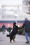 Der Hund bemannt besten Freund gibt seine Tatze Stockfotografie