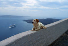 Der Hund betrachtet das Meer Lizenzfreies Stockfoto