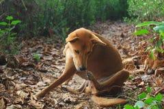 Der Hund, der auf dem Gehweg verkratzt stockfotografie