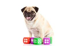 Der Hund, der auf weißem Hintergrund lokalisiert wird, würfelt Spielwaren Stockfoto