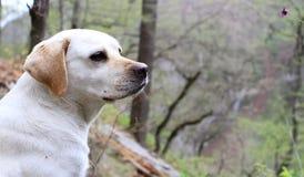 Der Hund, der Natur betrachtet Lizenzfreie Stockfotografie