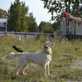 Der Hund führt die Befehle des Eigentümers durch Hintere Ansicht eines Welpenhundes auf einem grauen Hintergrund stockfotos