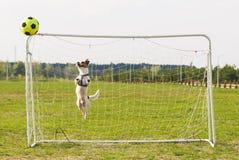 Der Hund, der Fußballfußball spielt, springt gerade oben Lizenzfreie Stockfotos