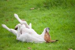 Der Hund glücklich Lizenzfreies Stockfoto