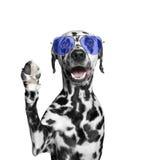 Der Hund grüßt Sie Lizenzfreie Stockfotografie