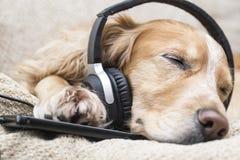 Der Hund hört Musik am Handy beim Lügen auf der Couch Lizenzfreie Stockbilder