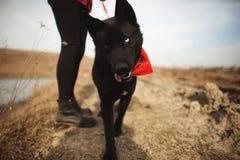 Der Hund hat Spaß mit ihrem Eigentümer auf dem Herbstgebiet stockfoto