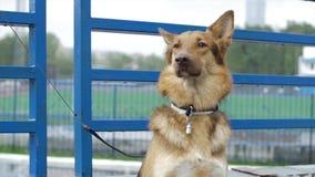 Der Hund im Dorf sitzt gebunden an einer Kette Gebundener Hund sitzt am Zaun Hund, der auf seinen Meister wartet Lizenzfreie Stockfotos