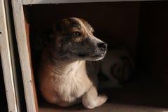 Der Hund im Stand Lizenzfreie Stockfotografie