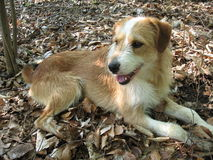 Der Hund im Wald Lizenzfreie Stockfotografie