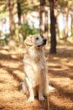 Der Hund ist ein Labrador im Waldfreundlichen Hund Lizenzfreie Stockbilder