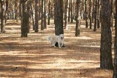 Der Hund ist ein Labrador im Waldfreundlichen Hund Lizenzfreies Stockbild