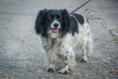 Der Hund ist heraus für einen Weg in Kamenskoe Ukraine lizenzfreies stockbild