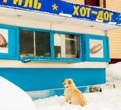 Der Hund ist am Kiosk stockbilder