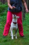 Der Hund ist zwischen den Füßen des Meisters Stockfoto