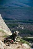 Der Hund legt am Rand eines Felsens Stockfotografie
