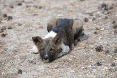 Der Hund liegt auf der Erde Stockfoto