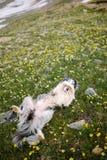 Der Hund liegt auf einem Blumengebiet lizenzfreies stockfoto