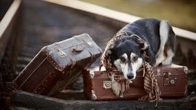 Der Hund liegt auf Koffern auf Schienen Stockbild