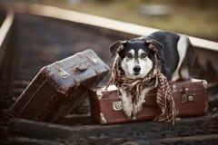 Der Hund liegt auf Koffern auf Schienen Lizenzfreies Stockbild